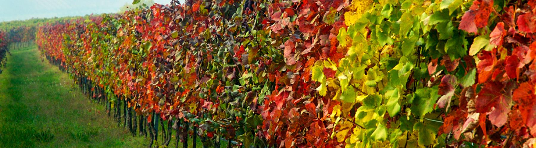 abiding life ministries canada vineyard